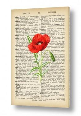 פרחים פרגים | פרג אדום3 רטרו על טקסט