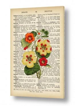 צמח אדום לבן רטרו על טקסט