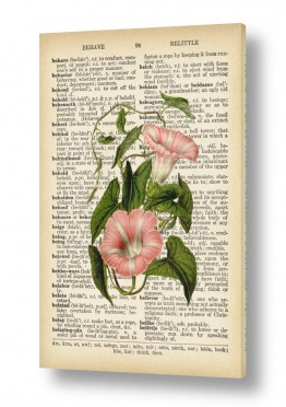 ציורים Artpicked  | צמח ורוד לבן רטרו על טקסט