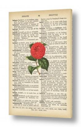 ציורים Artpicked  | ורד ורוד רטרו על טקסט