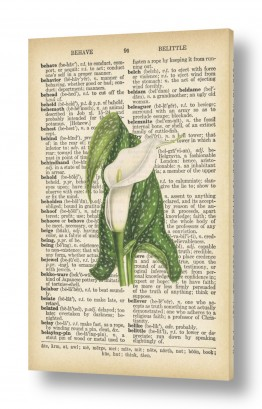 ציורים רטרו   פרח לבן ירוק רטרו על טקסט