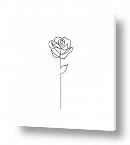 צמחים פרחים | ורד בקו