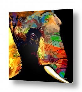 עולם אפריקה | פיל בצבע