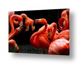 ציורים בעלי חיים | להקת פלמינגו
