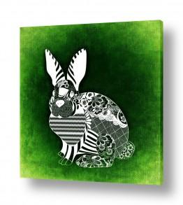 חיות חיות מחמד | ארנב דיגיטלי