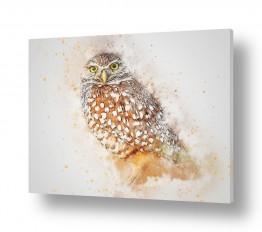 ציורים ציור בצבעי מים | עיני נץ
