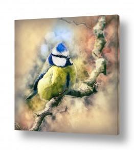 ציורים ציור בצבעי מים | ציפור על ענף