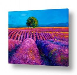 ציורים Artpicked  | שדה פורח בסגול
