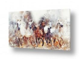 חיות יונקים | סוסי פרא