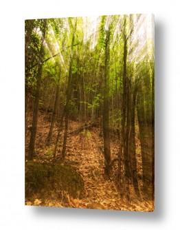 תמונות לפי נושאים צמרות עצים   מסתורין