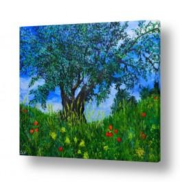 עץ עץ זית | זַיִת רַעֲנָן יְפֵה פְרִי