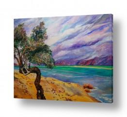 ציורים שמואל מושניק | עץ השיטה על חוף ים המלח