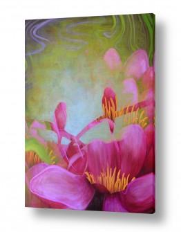 פרחים לוטוס | לוטוס אהבה-לאהבה טהורה