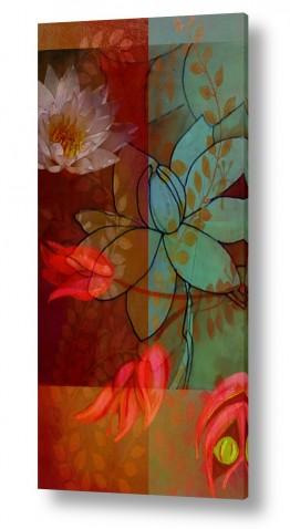 פרחים לוטוס | פריחת הלוטוס-לאהבה טהורה