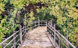 גשר אל תוך היער