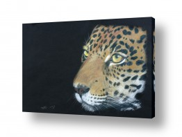 ציורים נריה ספיר | נמר