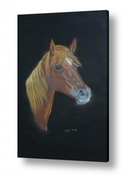 תמונות לחדרי ילדים | דיוקן סוס