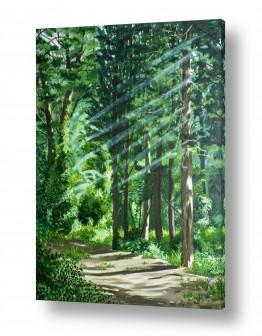 ציורים עירוני וכפרי | בוקר ביער