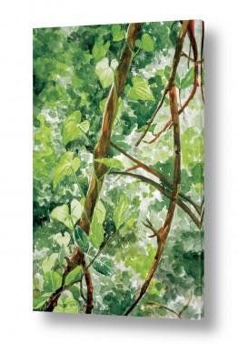 ציורים ציור בצבעי מים | המטפס