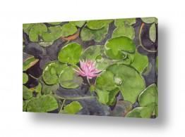 ציורים ציור בצבעי מים | נימפיאה במים