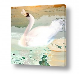 עוף מים ברבור | שירת הברבור