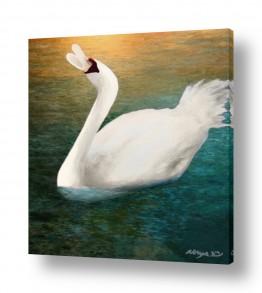 ציורים בעלי חיים | שירת הברבור