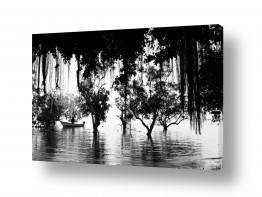 עץ שורש | נוף בשחור-לבן