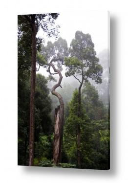 אסיה תאילנד | עץ מוזר