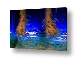 צילומים תת-מיימי | פיש ספא