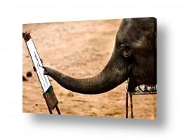 אסיה תאילנד | פיל מצייר?!  כן.
