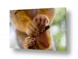 אנשים פורטרט | ידי קוף
