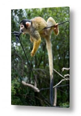 אנשים פורטרט | תלוי אם זה קוף...