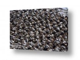תמונות לפי נושאים ניו זילנד | שטיח מעופף...