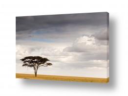 עולם אפריקה | עץ בודד
