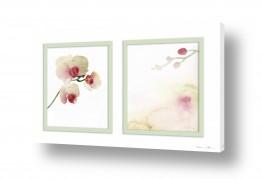 פרחים סחלב | סחלבי פרא
