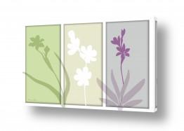 פרחים סחלבים | שלישיית סחלב פסטל