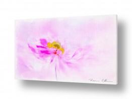 ציורים ציורים אנרגטיים | פרח ברוח