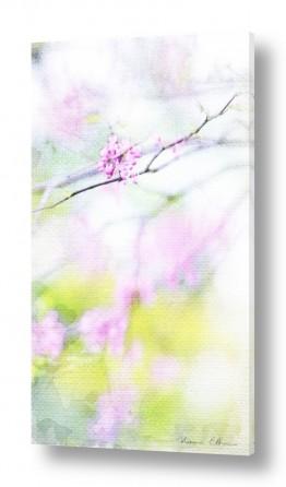 תמונות לפי נושאים חופש | ענף עדין