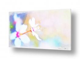 ציורים אמנות דיגיטלית | פריחה לבנה