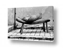טבע דומם ספסלים | דומים