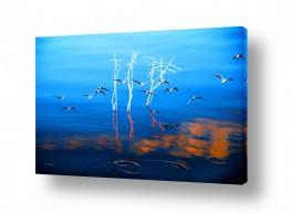 ציורים נופים וטבע   קלילות