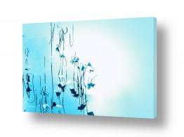 ציורים מים | כמעט פרפרים