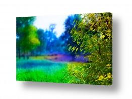 עץ גזע | טבע עם צבע