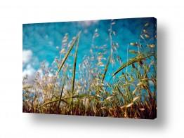 שדות שדות חיטה | רוח בשדה