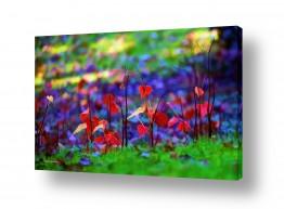 פרחים גבעולים | צבעי השלכת