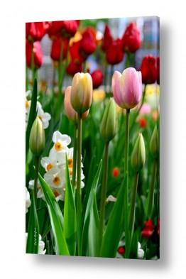 תמונות לפי נושאים צבעים חמים | פרחים מהודרים