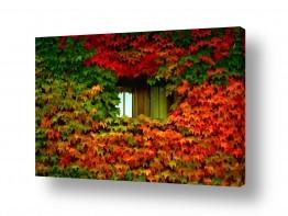 צילומים אורית גפני | סתיו אל החלון