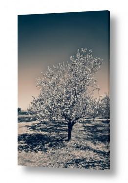 נוף תמונה פנורמית | שקדיה בחורף