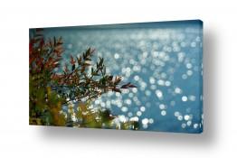 צילומים חופים וים | ניצנוצים של בוקר