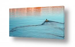 נוף מיים | סולן